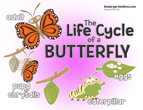photograph about Butterfly Life Cycle Printable identify Butterfly Everyday living Cycle Printables - Kindergarten Mother