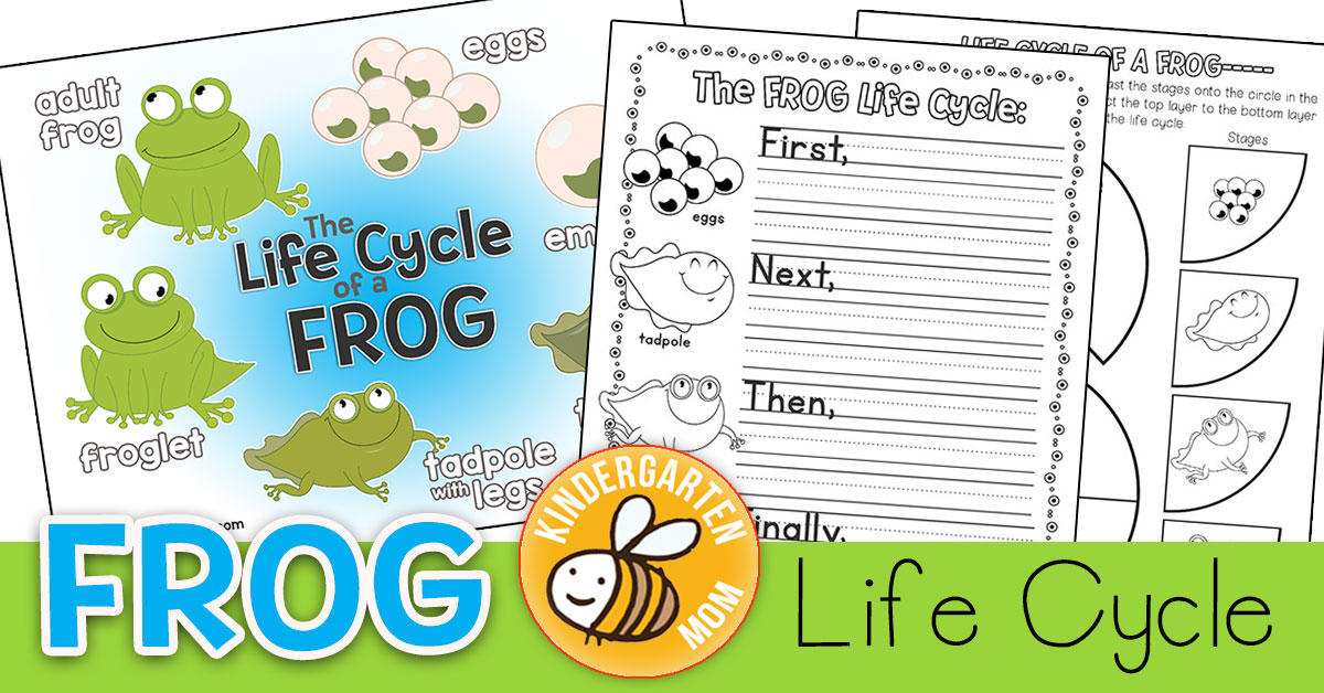 picture regarding Printable Frogs named Frog Lifestyle Cycle Printables - Kindergarten Mother